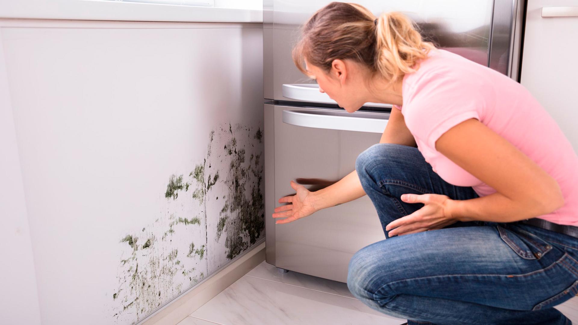 Saiba como evitar os perigos que o mofo oferece à sua saúde